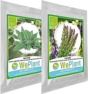 BIO/ORGANICO Salvia & Hisopo - Semillas ecológicas de