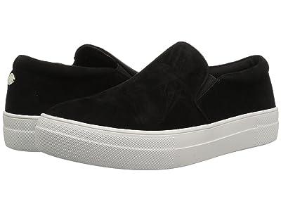Steve Madden Gills Sneaker (Black Suede) Women