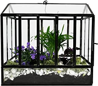 """Urban Born Glass Terrarium, Greenhouse - 10""""x7""""x10 (Urban Black Steel, Large)"""