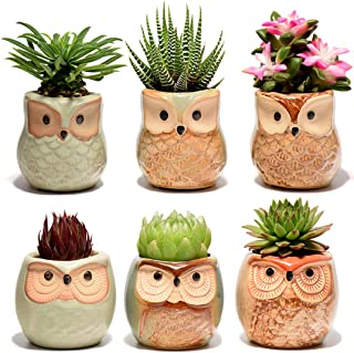 Succulent Planter, Cute Ceramic Owl Planters with Drainage, 2.5 Inch Small Flower Pot, Set of 6 Pots for Plants