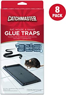 rat sticky trap