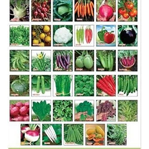 Plant Seeds: Buy Plant Seeds Online at Best Prices in India