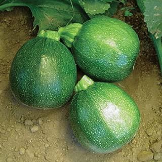 50 Seeds Heirloom Round Zucchini Summer Squash Eight Ball