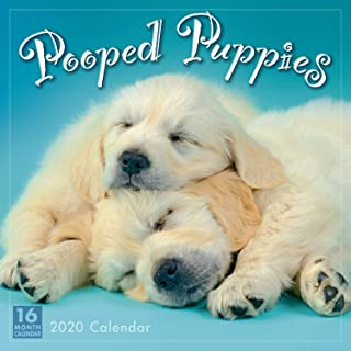 Pooped Puppies 2020 Wall Calendar: by Sellers Publishing