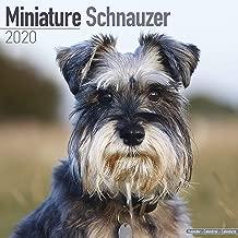 Miniature Schnauzer Calendar 2020 - Dog Breed Calendar - Wall Calendar 2019-2020