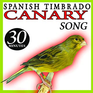 Spanish Timbrado Canary Song Birds Sounds