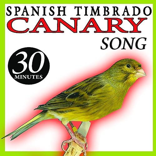 TIMBRADO TÉLÉCHARGER MP3 CHANT DE GRATUITEMENT CANARI