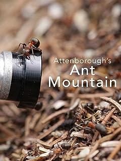 Attenborough's Ant Mountain