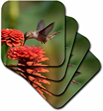 3dRose Orange Zinnias and Hummingbird - Summer Photography - Soft Coasters, Set of 4 (CST_63595_1)