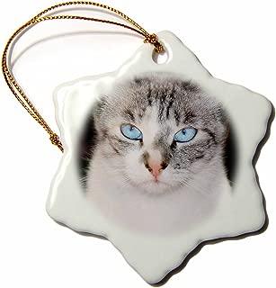 3dRose USA, California. Lynx Point Siamese cat Portrait Snowflake Ornament