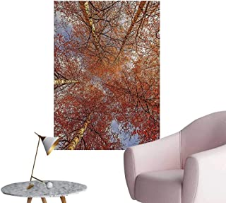 Modern Decor Birch Trees Rural Oak in Woodland Peace Environment Park Foliage Picture Orange Ideal Kids Decor or Adults,20