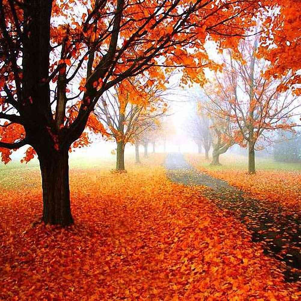 GladsBuy Autumn Fallen Leaves 5 x 5 Computer Printed Photography Backdrop Nature Theme Background DT-12-43