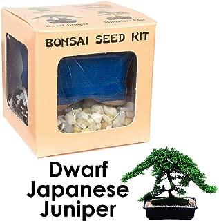 Eve's Dwarf Japanese Juniper Bonsai Seed Kit, Woody, Complete Kit to Grow Dwarf Japanese Juniper Bonsai from Seed