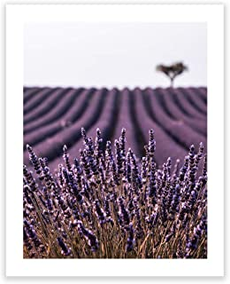 Humble Chic Wall Art Prints - Unframed HD Printed Plants Picture Poster Decorations for Home Decor Living Dining Bedroom Bathroom College Dorm Room - Lavender Field Flowers, 16x20 Vertical