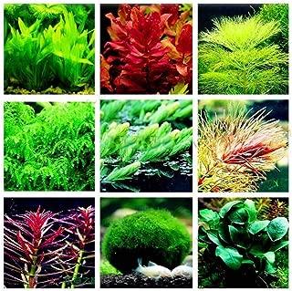 Taloyer Aquarium Plant Mix Seeds Water Grasses Random Aquatic Plant Grass Indoor Fish