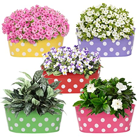 Amazon Brand - Solimo Rust-Free Hanging Planter - Set of 5 (Oval - Red, Green, Yellow, Pink, Purple)