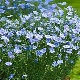 Best perennial blue flax Reviews
