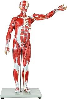 Best 3d model of human organs Reviews