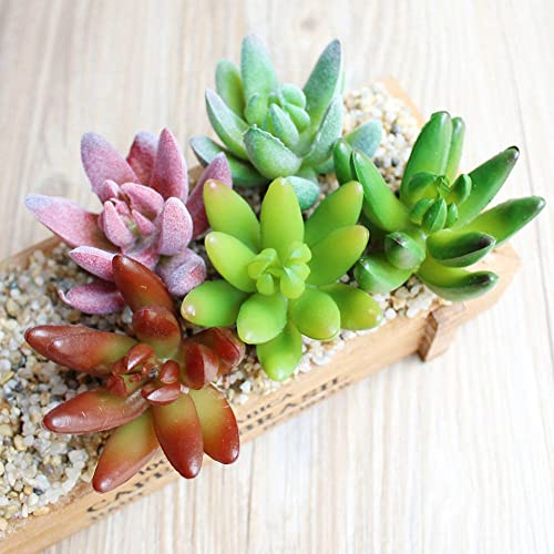 Climberty Pvc Artificial Succulents And Cactus Plants, 5-Pieces (Assorted)