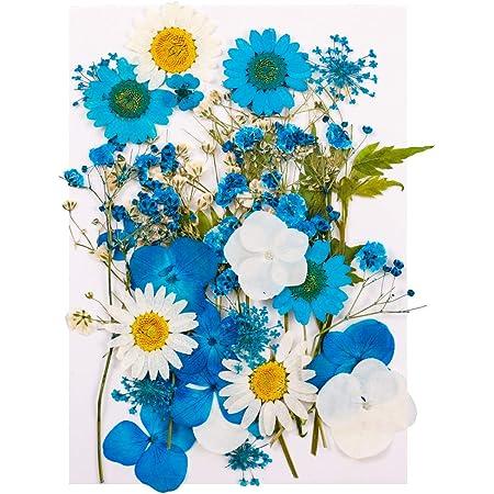 Heyu-Lotus Fleurs Séchées Naturelles Pressées Mélange Fleurs Séchées pour Bricolage Bougie Résine Nail Art Décoration Artisanat Maquillage Peinture DIYArtisanat (Bleu)