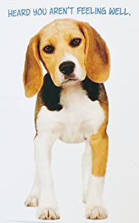 Heard You Aren't Feeling Well - Get Well Soon / Feel Better Greeting Card w/ Beagle Dog -