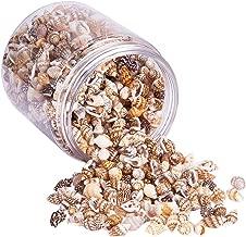tiny seashells bulk