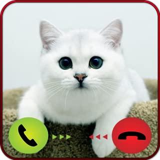 White Cat Call - Pet Prank
