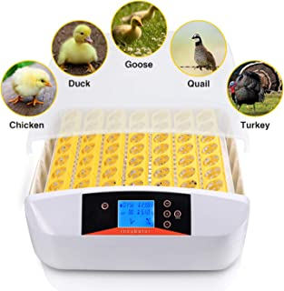 egg incubator little giant