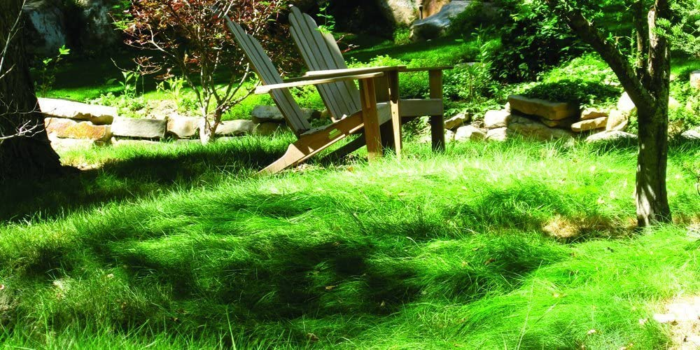 Nature's Seed S-FEOV-1LB Sheep 1 Max 86% OFF Al sold out. lb Grass Fescue