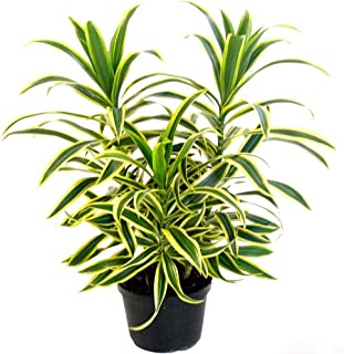air plants india