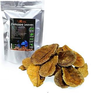 Dr. Moss Catappa Leaves - Indian Almond Leaves Medium Catappa 10-15cm for Betta Fish & Shrimps