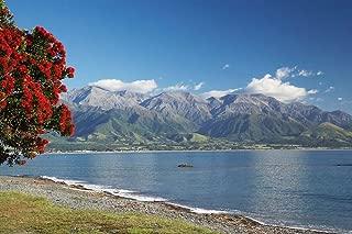 Pohutukawa Tree, Marlborough, South Island, New Zealand by David Wall/Danita Delimont Art Print, 37 x 25 inches