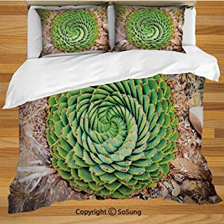 Plant Queen Size Bedding Duvet Cover Set,National Flower of Lesotho South of Africa Aloe Polyphylla Spinning Spiral Aloe Vera Decorative 3 Piece Bedding Set with 2 Pillow Shams,Multicolor