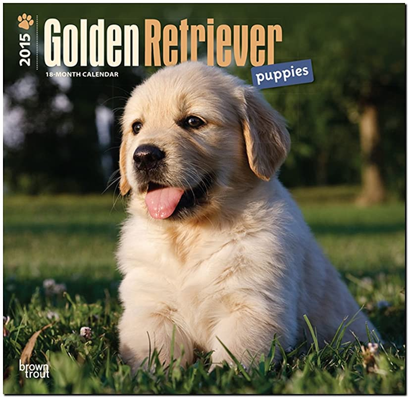 置換に貴重なGolden Retriever Puppies 18-Month 2015 Calendar