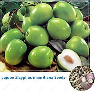 WANCHEN Jujube Zizyphus mauritiana Seeds Indian Jujube Tree Seeds Bonsai Rare Tropical Fruit Seeds for Home Garden 10seeds/Bag