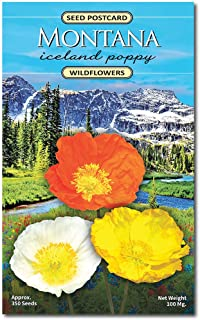 Montana Iceland Poppy Wildflower Seed Packet - Enjoy The Natural Beauty of Montana Flowers in Your Own Home Garden