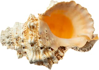 Best conch shell sound Reviews