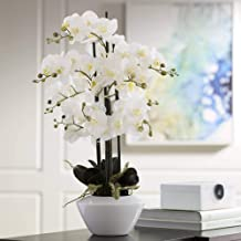 Dahlia Studios White Phalaenopsis Orchid 29
