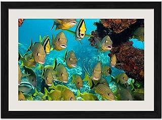 Marine Fish - E - Art Print Wall Black Wood Grain Framed Picture(16x12inch)