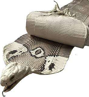 Asia Open Mouth Spitting Monocled Cobra Snake Skin Snakeskin Hide