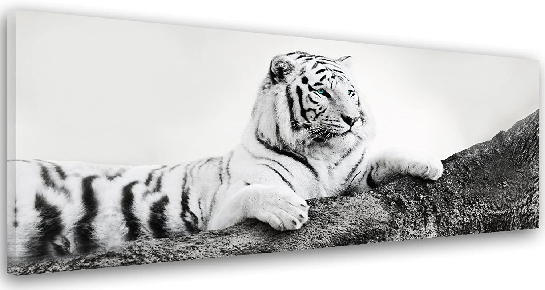 Feeby Frames, Frames, Frames, Leinwandbild, Bilder, Wand Bild, Wandbilder, Kunstdruck 50x150cm, TIGER, TIER, SCHWARZ-WEISS B06W5K1VHQ 7092be
