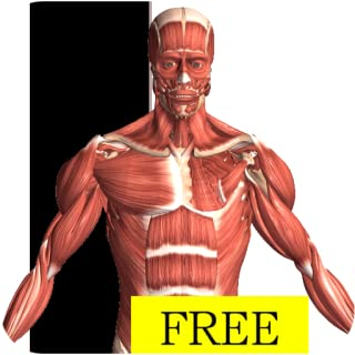 Best free human body anatomy software Reviews