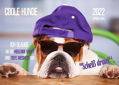 Lustig sprüche hunde 22 Gute