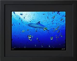 【写真工房アートフォト 額装写真】 メジロザメのパレード/アリ環礁/モルディブ(ブラック 大判サイズ 557mm×442mm)