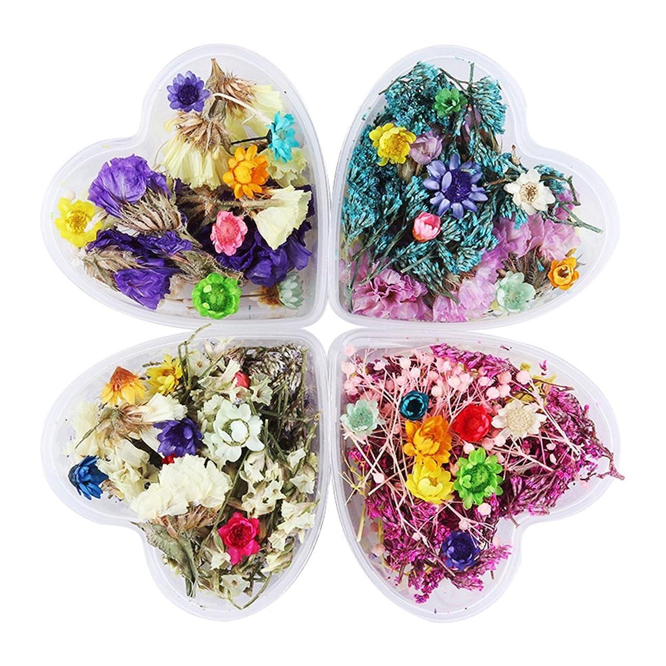 タイプライター謝る才能のあるBORN PRETTY 押し花 ドライフラワー 4ボックスセット 3Dネイル 花材 レジンデコレーション DIYデコレーション飾り用品 (セット4) [並行輸入品]
