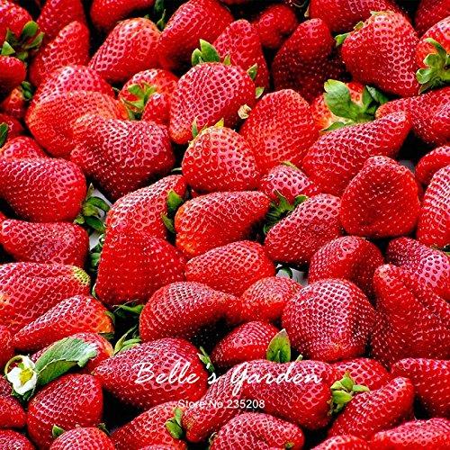 100pcs 9 variétés Choix Strawberry Graines Fraise Fruit Graines pot Bonsai Balcon Patio Jardin Plante Bricolage Rouge