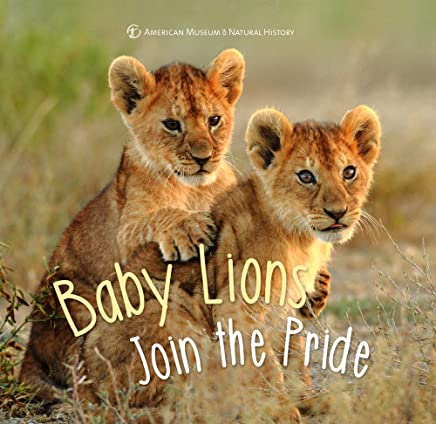 Baby Lion Joins the Pride