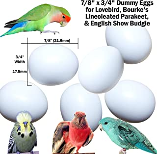 DummyEggs Stop Laying! Fake Bird Eggs Lovebirds, Lineoleated Parakeet, English Show Budgie, Bourke's. White Solid Plastic Realistic - 7/8
