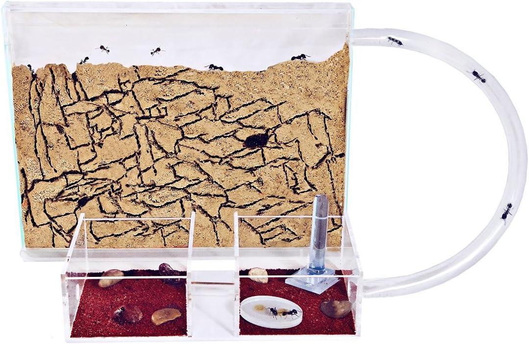 AntHouse - Hormiguero Natural de Arena - Kit Medium (Sándwich + Caja de Forrajeo) (Hormigas Gratis)