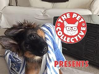 Best wonder pets video clips Reviews